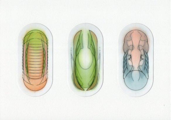 symmetrical biomorphs 2.12