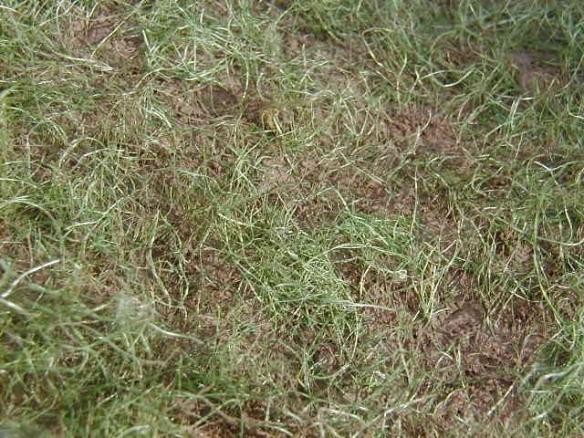model grass detail