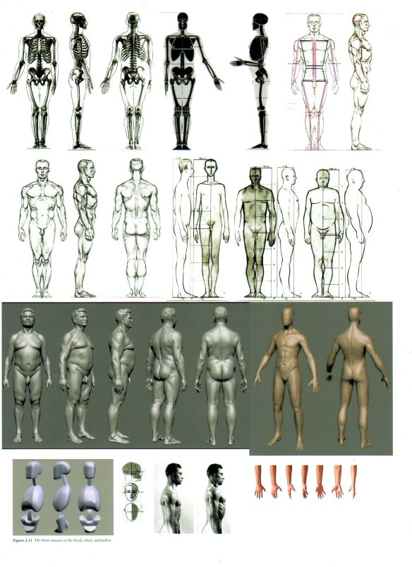 male figure reference sheet