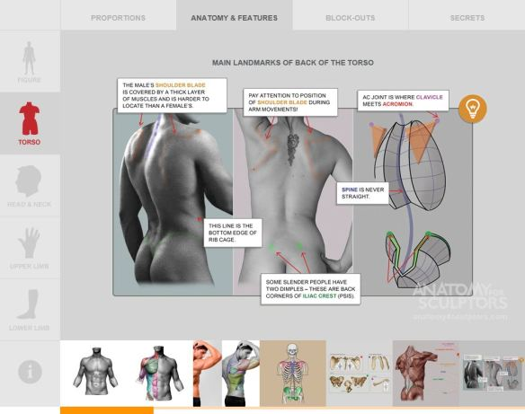 Anatomy For Sculptors 'Main landmarks of back of the torso'
