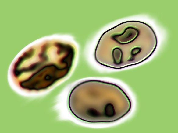 beans_final03websize