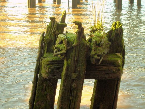 Old 'dolphin' near Enderby's Wharf, Thames Foreshore, Greenwich Peninsula