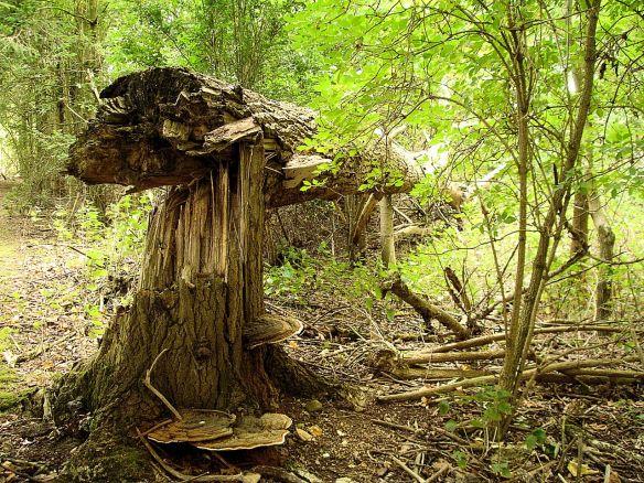 David Neat, studies for 'NatureMake', Cambridgeshire woodland July 2017
