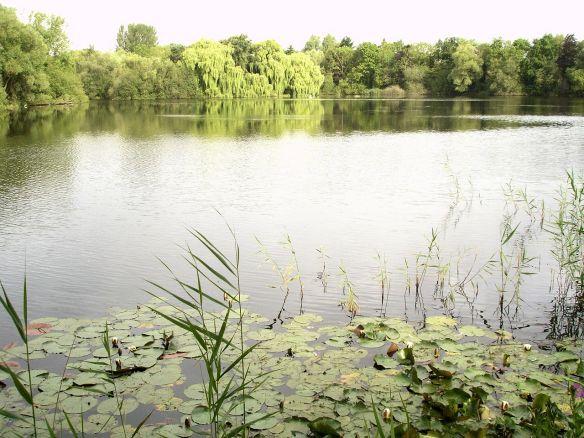 David Neat, lakeland in Cambridgeshire July 2017