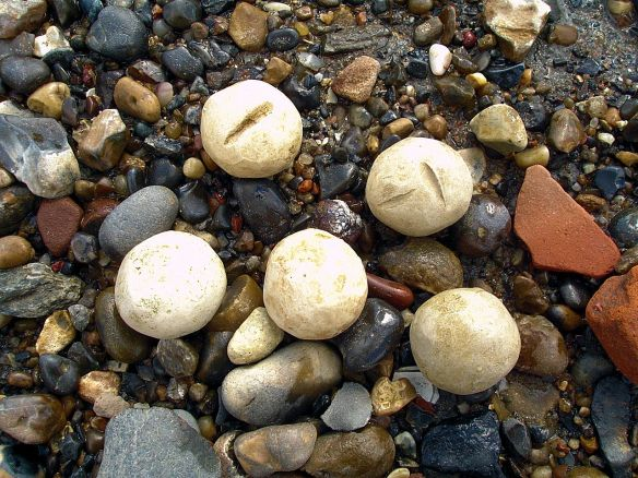 David Neat, Thames Foreshore, mystery fired clay balls, Deptford